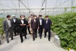 ظرفیت گلخانه های آذربایجان غربی به ۱۰ هزارتن در سال افزایش یافت