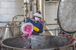 بانوی کارآفرین؛ از کانادا تا مزرعه گل محمدی در ساروق