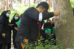 اسکن درختان کهنسال در قلب پایتخت/ آموزش توموگرافی در بوستان لاله