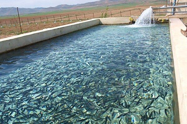 ظرفیت تولید ماهیان سردآبی استان به ۱۸ هزار تن افزایش یافته است