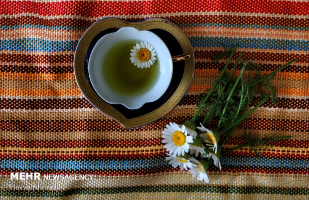 بابونه به شکل اسانس، تنتور یا چای به مقابله بااسترسکمک می کند و همچنین باعث آرامش می شود.