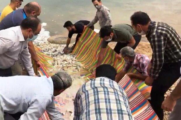 ۱۰ هزار قطعه ماهی در رودخانه دز رها سازی شد