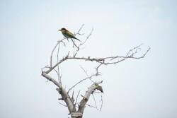 شناسایی ۱۱۰ گونه پرنده در پناهگاه حیات وحش یخاب