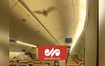 VIDEO: Live bat returns US-bound air india flight