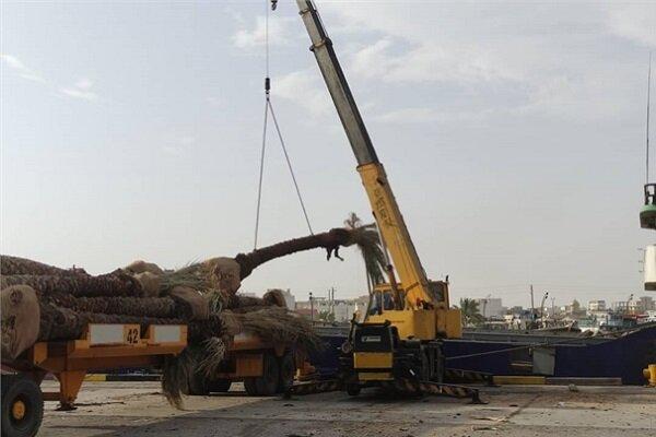 محموله درخت های نخل از بندر گناوه به کویت صادر شد