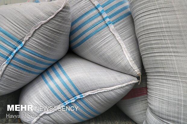 کلزا به دو صورت کیسه ای و فله قابل انتقال به مراکز خرید می باشد.