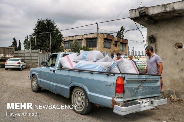کلزاکاران پس از برداشت دانه های روغنی کلزا به مراکز خرید که از سوی جهاد تعیین شده مراجعه می کنند.