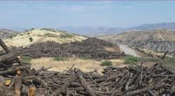 تورکیا ڕۆژانە 450 تەن داری هەرێمی کوردستان دەدزێت