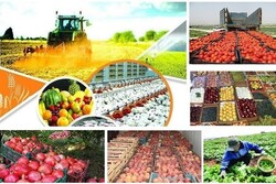 Agricultural products account for over 17% export value share