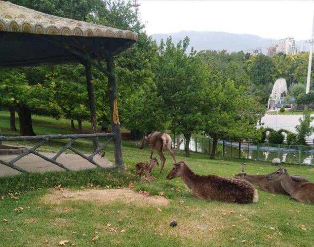 İran'ın kuzeyinde Kiyaser Milli Parkı