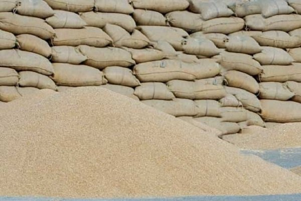 ۲۱ مرکز برای خرید گندم کشاورزان در استان سمنان آماده شده است