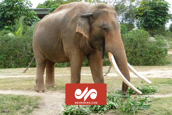 چين میں ایشیاء کے نایاب ہاتھیوں کی مہاجرت
