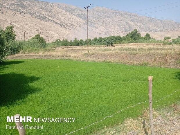 Beauties of Dah Houz Village in SW Iran