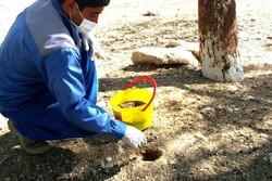 اعتبارات ویژه برای مبارزه با موش در اراضی استان سمنان اختصاص یابد