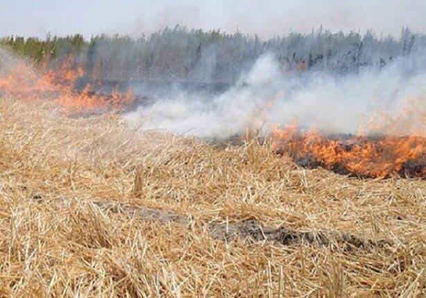 جریمه میلیونی برای آتش زدن اراضی کشاورزی
