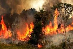 آتشسوزی در مراتع و جنگلهای شمال دامغان اطفا شد