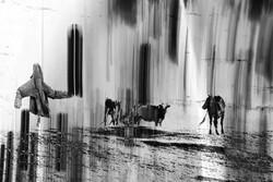 تماشای یک سبک متفاوت عکاسی در گالری «شکوه»