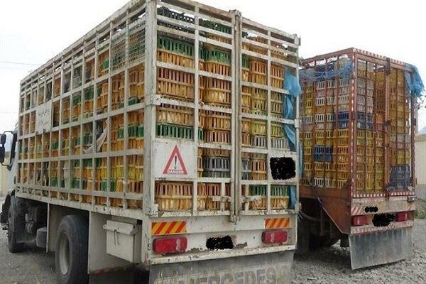 توزیع مرغ رهگیری میشود
