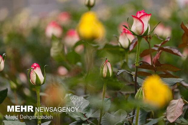زراعة الزهور في الصحراء