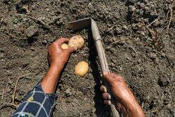 کاهش ۴۵۰ هزار تنی محصولات کشاورزی در اردبیل/۳۹۰۰ میلیارد تومان خسارت وارد شد