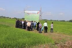 بهره برداری از ۱۱۹ پروژه کشاورزی در گیلان