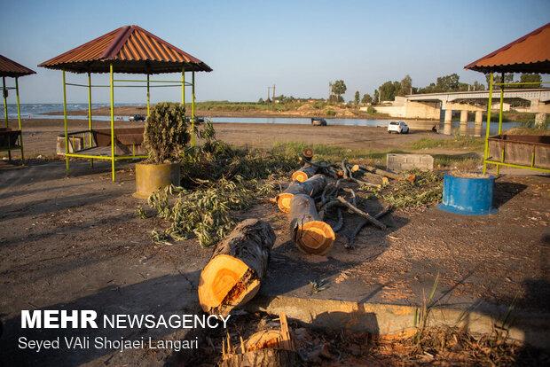 قطع درختان تالاب