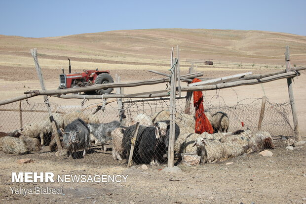 کلنگ زنی آبرسانی به روستای تنوره بخش فیروزآباد کرمانشاه