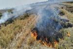 آتش در شالیزارهای گلستان
