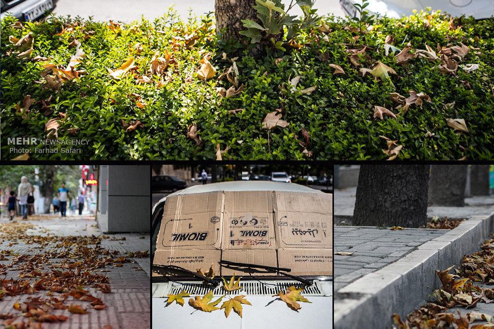 خزان درختان به وقت تابستان/ شهرهایی که «تیرماه» پاییزی شدند!