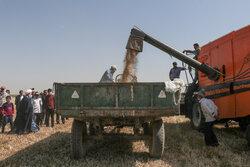 ورود ۲ محموله گندم به بندر امام/ بیش از ۷ هزار تن گندم وارد شده است