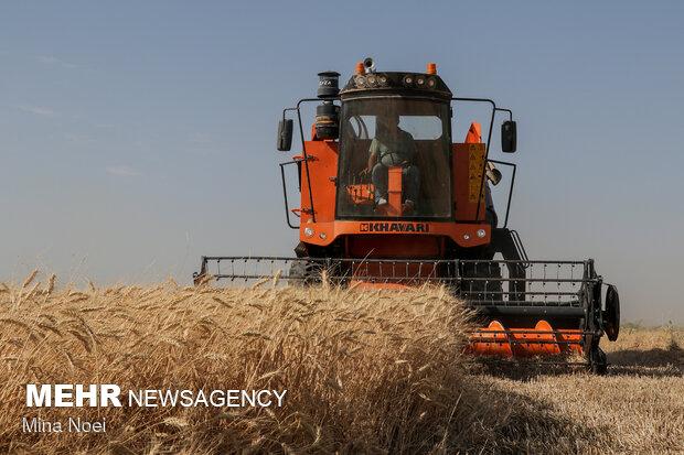 پیش بینی خرید تضمینی ۳۴۳ هزار تن گندم در کردستان
