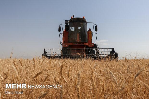 ۷۰ درصد ارزشافزوده بخش کشاورزی به حوزه زراعت اختصاص دارد