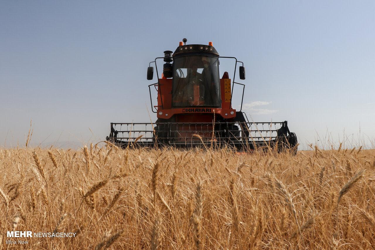 خرید تضمینی ۱۰۶ هزار تن گندم در آذربایجانشرقی