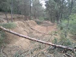 برداشت غیرقانونی از جنگل های علی آبادکتول/۵ نفر بازداشت شدند