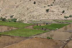 خوزستان حاصلخیز چگونه به استانی خشک تبدیل شد؟ / از حذف کشت مارچوبه تا کشت ۲۰۰ هزار هکتار برنج!
