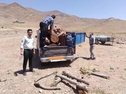 دستگیری شبانه ۵ متخلف قاچاق تاغ در شاهرود/ نیم تن چوب کشف شد