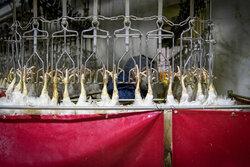 کشتارگاه صنعتی مرغ