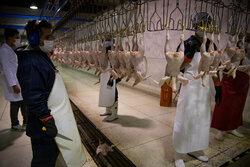 عرضه گوشت طیور در بهار امسال  ۱۰.۵ درصد افزایش یافت