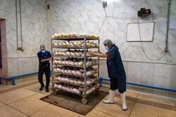 افزایش ۱۰ تا ۱۵ درصدی تولید گوشت مرغ در استان تهران هدف گذاری شد