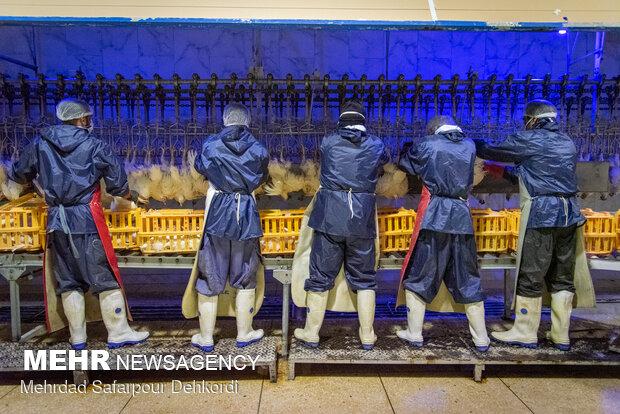 کشتارگاه صنعتی مرغ - چهارمحال و بختیاری