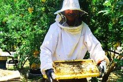 زنبورداران از اخذ «کد شناسه یکتا» مستثنی میشوند