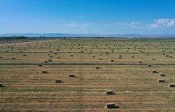 کاربرد فناوری های نوین زیستی در حل مشکلات اقلیمی/ لزوم حرکت به سمت کشاورزی دانش بنیان