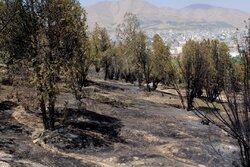 تپه باستانی و طبیعی توس نوذر سنندج در ورطه نابودی