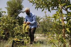 موانع  تامین آب فعالان بخش کشاورزی دشت مرکزی میناب مرتفع می شود