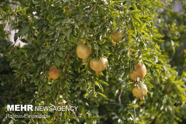 بیش از ۵۰ محصول پرکاربرد نانویی در کشاورزی روانه بازار شدند