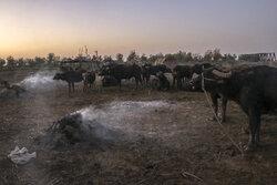 نشست کمیسیون های مجلس برای بحران آب خوزستان/ کشت پائیزه در خطر