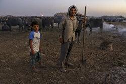 حتی ۲۵ درصد وعدههای دولت قبل در مورد دشت آزادگان هم محقق نشد