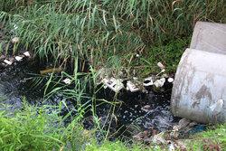 معدوم سازی ۱۰ هکتار از مزارع آبیاری شده با آب فاضلاب در بناب