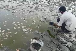 سد «ملاطالب» ازنا خشک شد/ انتقال آبزیان زنده به «حوضیان»
