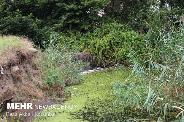 آبیاری باغات و زمین های کشاورزی اهر با فاضلاب